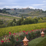 Villa Triturris vineyard